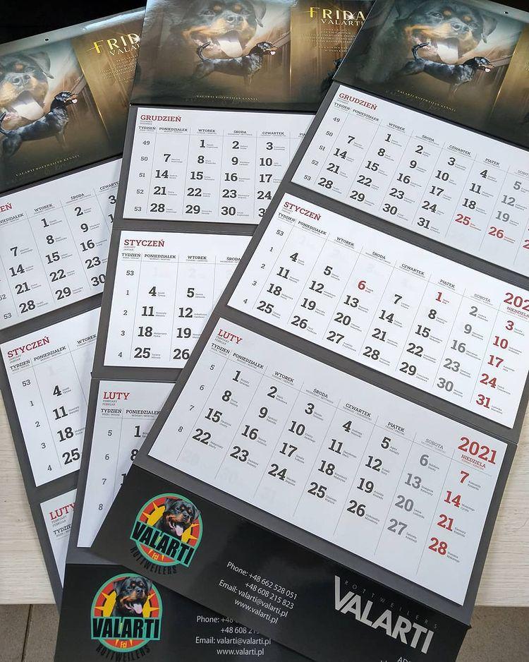 Druk kalendarzy trójdzielnych z wypukłą główką dla hodowli psów.